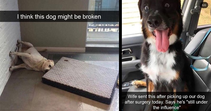Funny and cute dog pictures from Snapchat