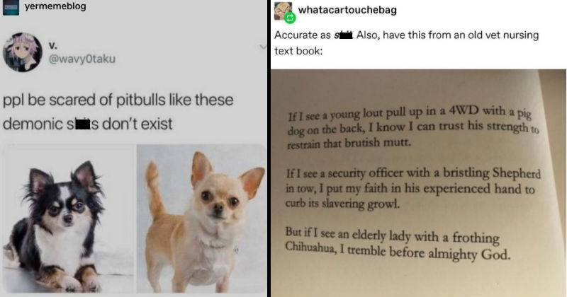 Tumblr theory explains why little dogs can be so terrible.