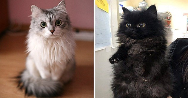 cats kittens pics floof