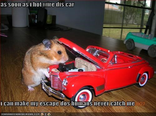 As Soon As I Hot Wire Dis Car I Can Make My Escape Dos Humans Never Catch Me Cheezburger Funny Memes Funny Pictures