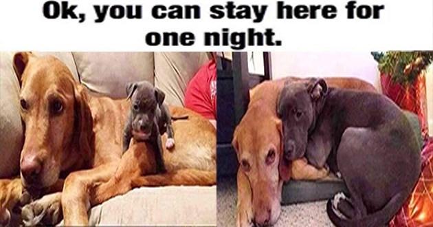 dogs funny doggo memes