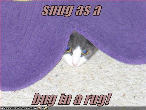 snug as a bug in a rug! - Cheezburger
