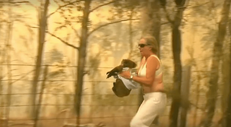 australia faith in humanity fire animal rescue koala - 9757189