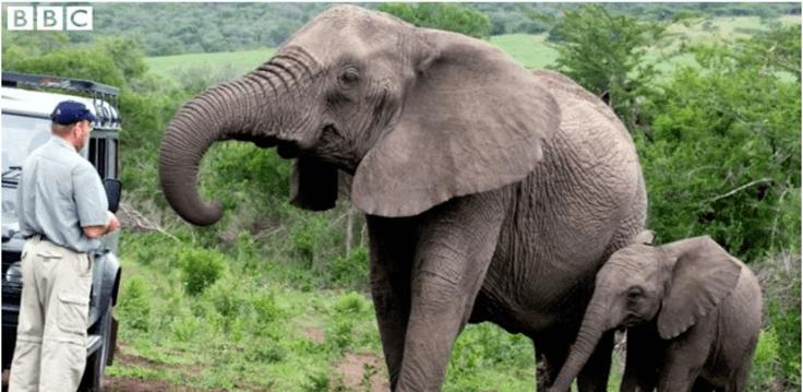 elephants grieving