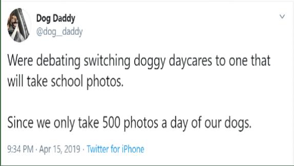 funny dog tweets