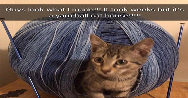 funny yarn ball house cats