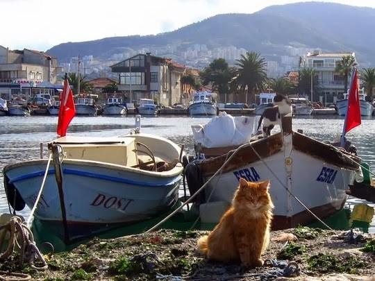 stray cats istanbul Turkey Cats - 9760005