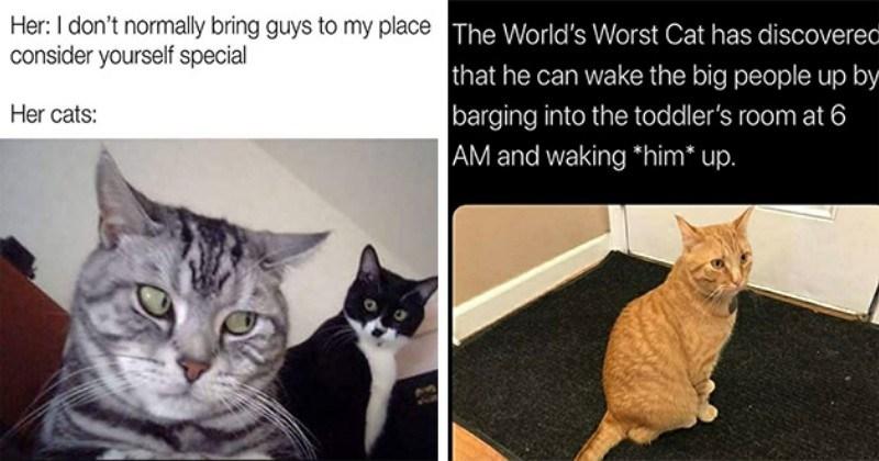funny cat memes caturday