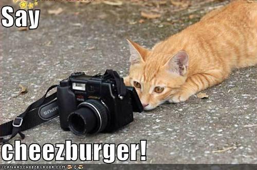 Cheezburger Image 977089792