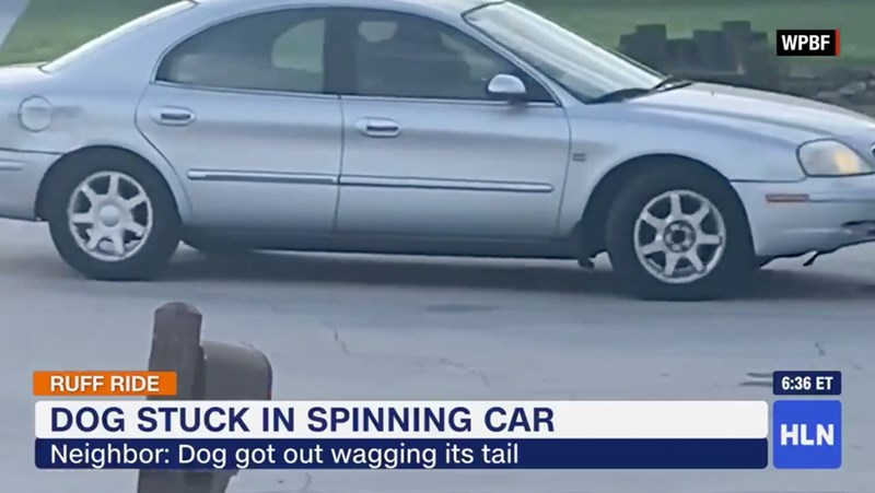 cars florida funny dogs reverse - 9781509