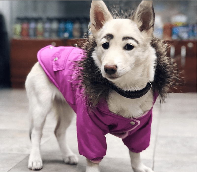 dogs eyebrows russian stray animals - 9782277
