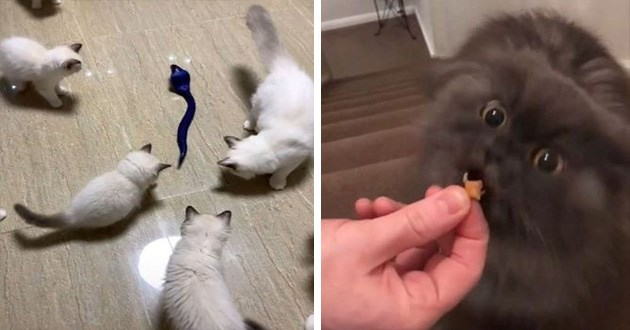 cats instagram videos funny