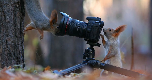 photography squirrel surreal squirrels wildlife - 978693