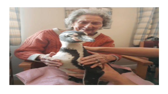 old lady meets penguin, penguin in nursing home