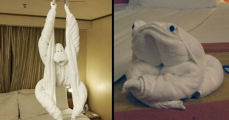 Fun and cool animal towel arrangements.