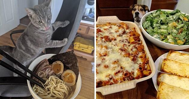 funny animals food pics