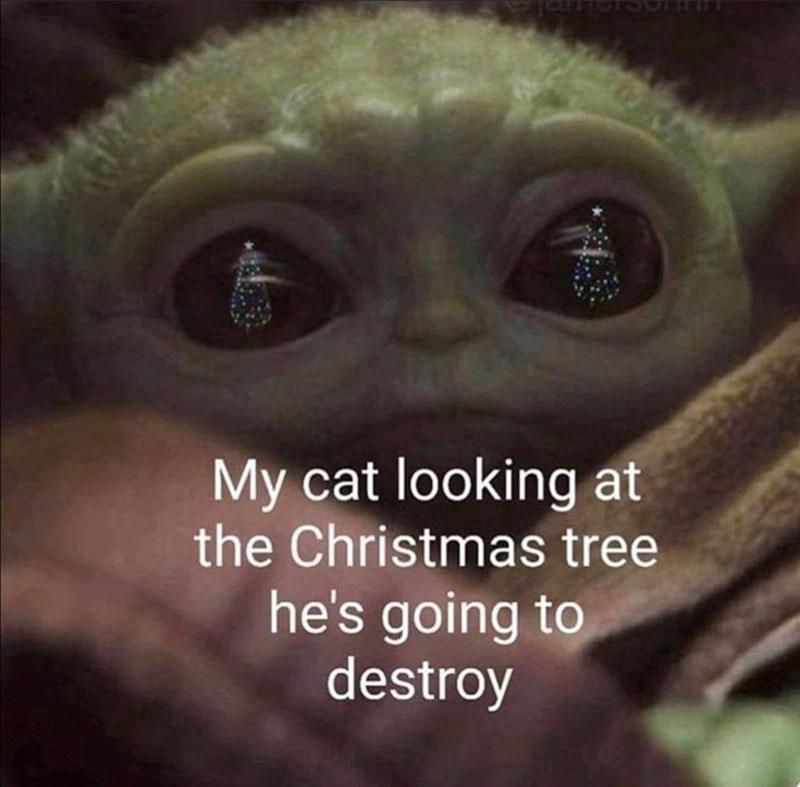 baby yoda cat memes