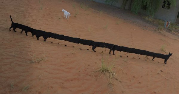 These Hilarious Panorama FAILs of Cats Are So Weird