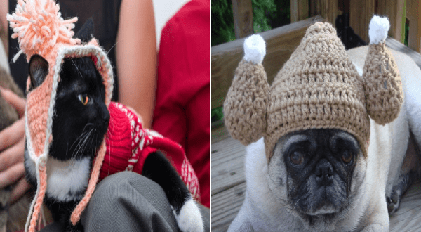 crocheted hats for pets