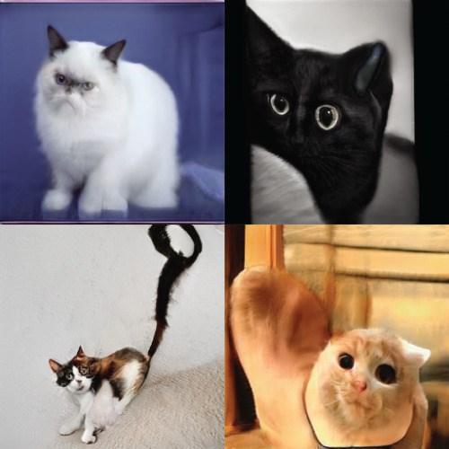 funny cat photos AI