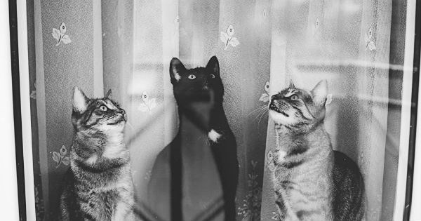 photography feline black and white Cats personality window - 981253
