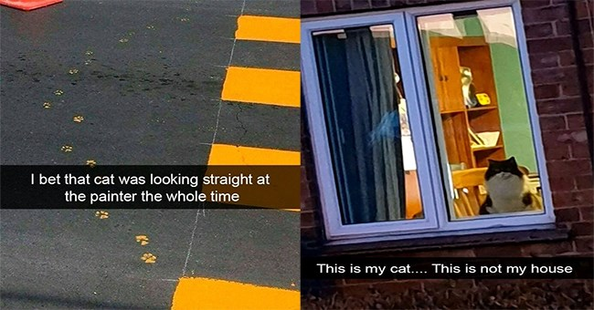 """a thumbnail for a list of adorable and funny cat snaps and the thumbnail has two images side by side of cat snaps, on the left there is an image of a cat that looks like the rice cooker and on the right there is a snap of a cat looking outside a window but the snap read """"this is my cat, but this is not my house"""""""