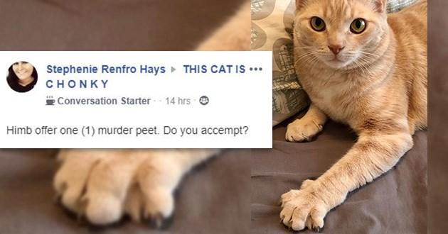 murder peet cats funny