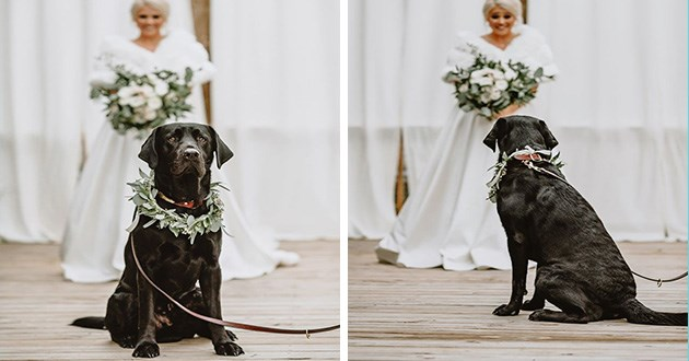 wedding dog photoshoot cute