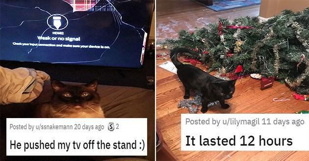 funny cats reddit assholes