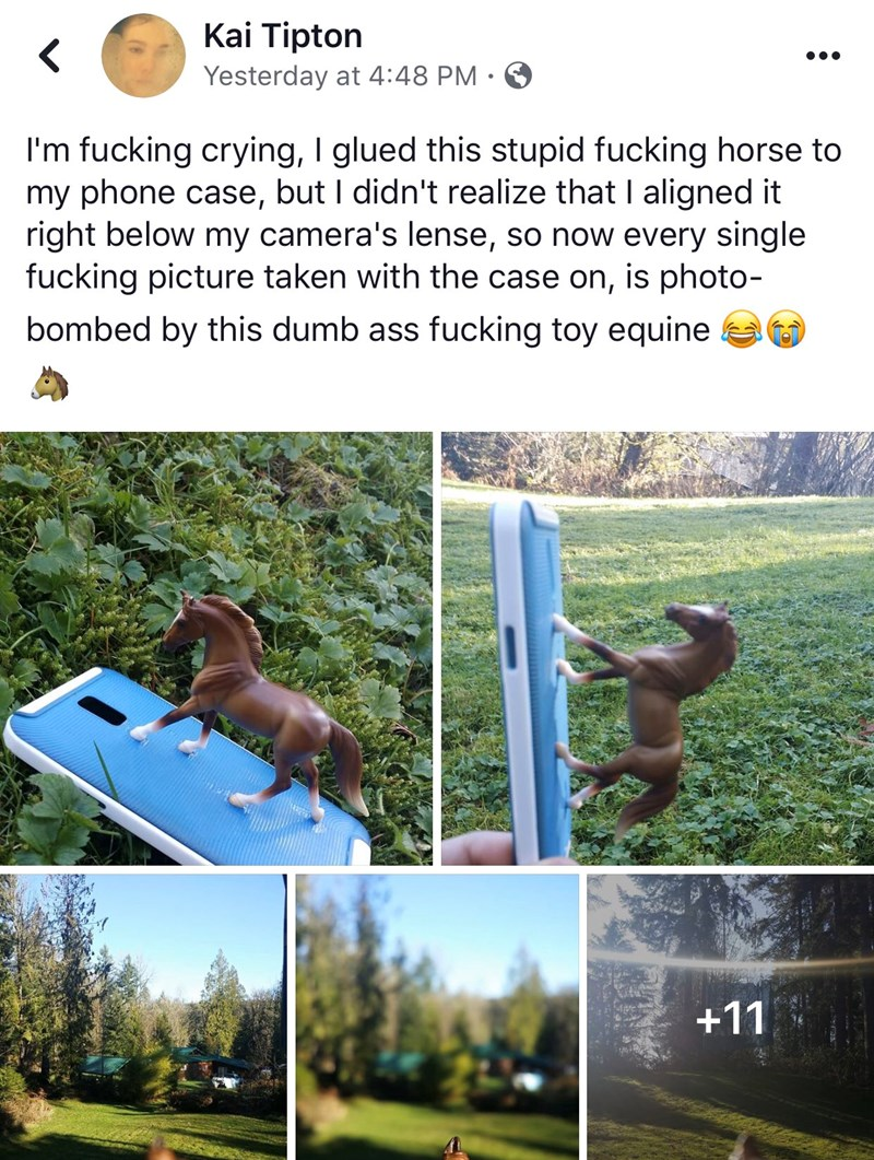 horse photobomb toy funny