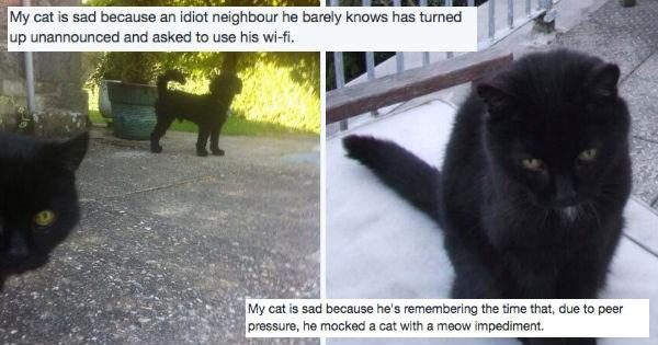 Sad humor twitter British Cats funny - 982789