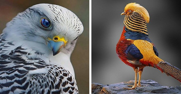 beautiful birds photography colorful