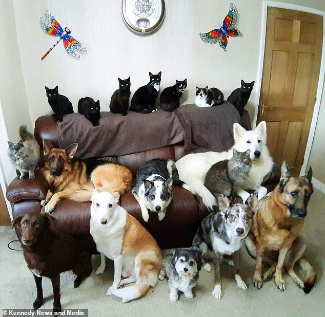 family photo of 17 cats and dogs