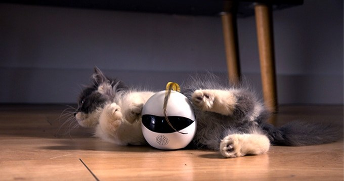 robot friend for cats