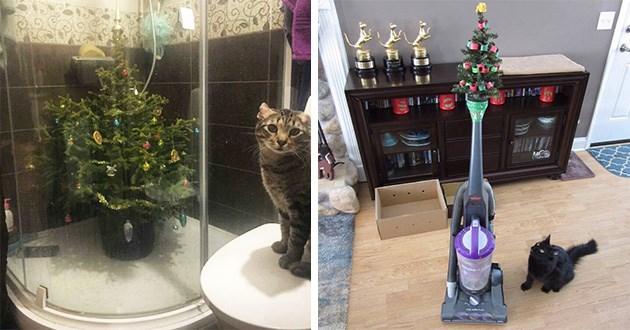 christmas proof tree cats