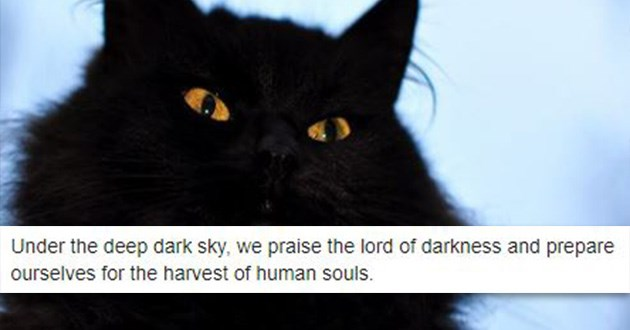 black metal cats funny