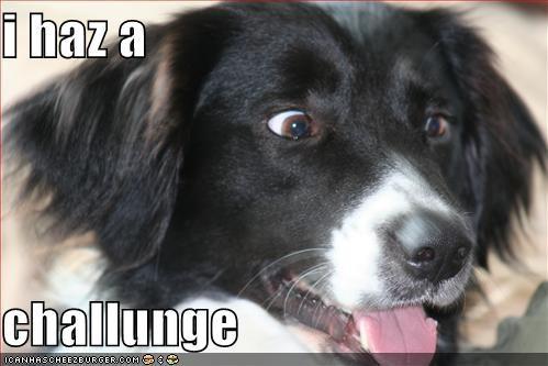 Cheezburger Image 988795648