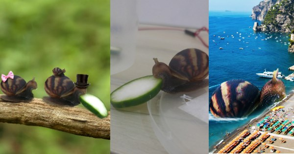 snail that is eating cucumber and made into a photoshop battle