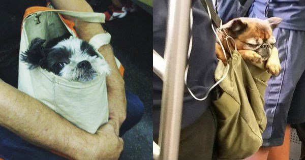 dogs,bags,creative,cute,new york,Subway