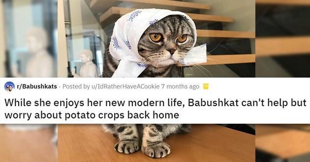 babushka cats babushkats funny
