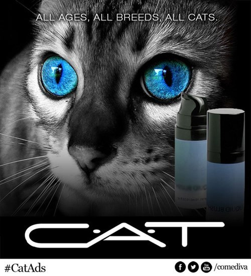 beauty products,makeup,perfume,ads,Cats,funny