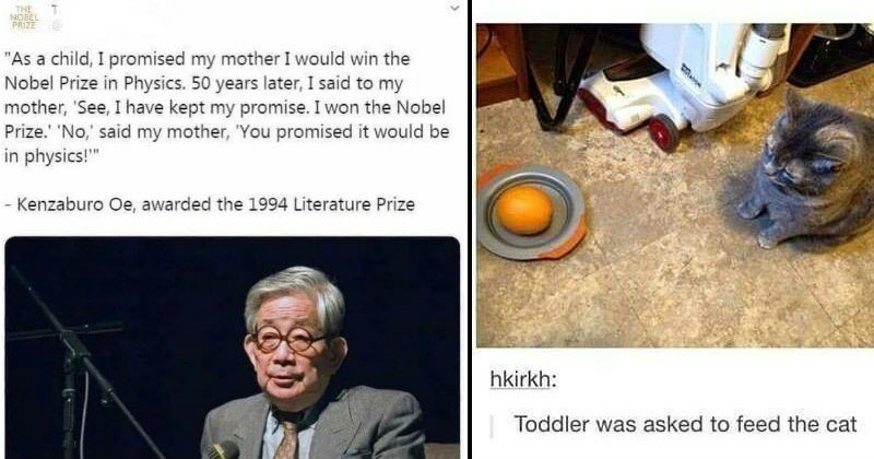 Funny attempts that failed | As child promised my mother would win Nobel Prize Physics. 50 years later said my mother See have kept my promise won Nobel Prize No said my mother promised would be physics Kenzaburo Oe, awarded 1994 Literature Prize. cat sitting and looking at a plate with a whole orange in it. Toddler asked feed cat.