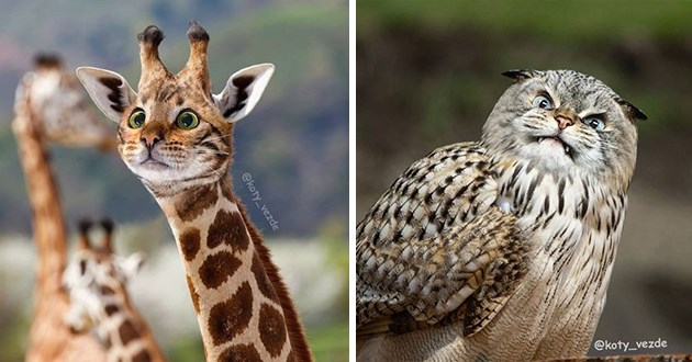 cats animals photoshop | funny pic of surprised cats head on a duck or some other form of cute bird | cat head photoshopped onto a giraffe in the wild licking it's young, also with cat's head