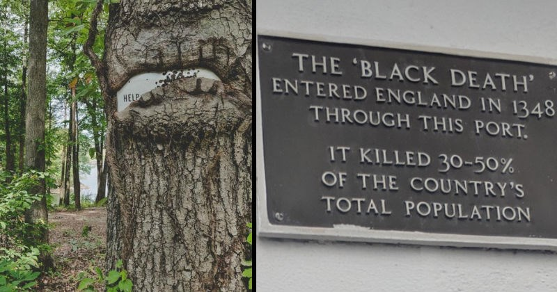 Bunch of signs that are scary, whether they are intended to be scary or not | Sign that only shows the word HELP that is being swallowed up by a tree | Sign at a port noting that the black death had entered Europe via that port and wiped out 30 to 50 percent of the population