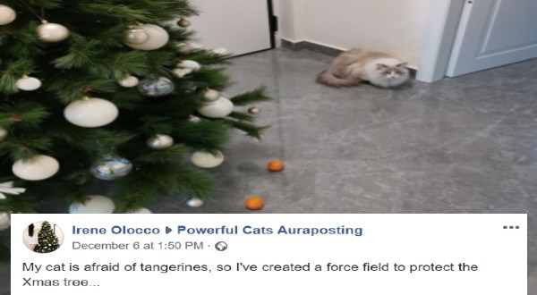keeping the cat away from the christmas tree | Christmas tree - ► Powerful Cats Auraposting Irene Olocco December 6 at 1:50 PM · My cat is afraid of tangerines, so l've created a force field to protect the Xmas tree...