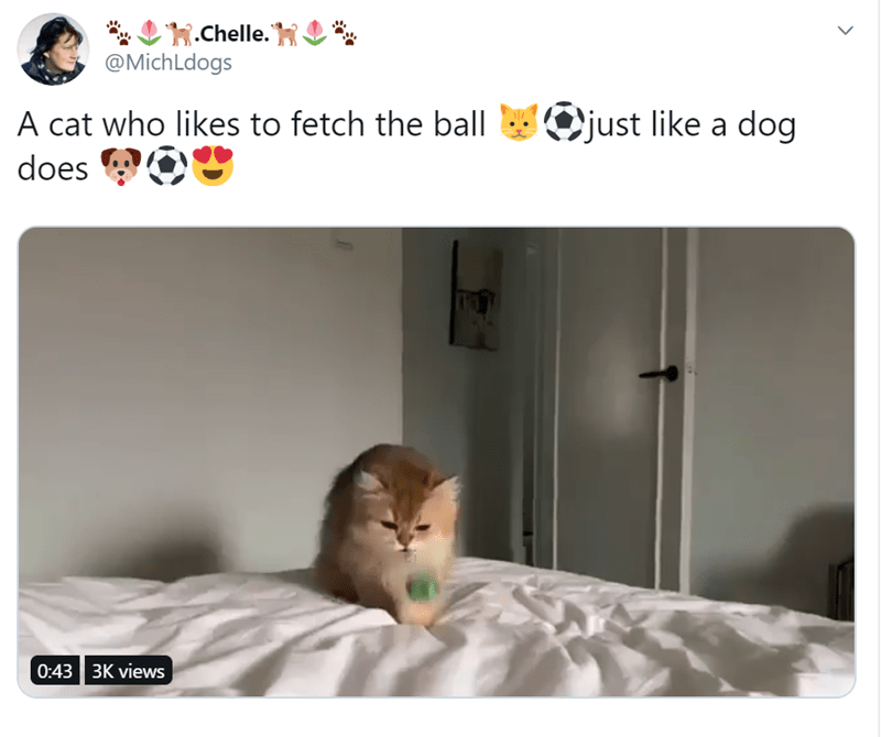 cats playing fetch throwing items to cats and having them return them | a cat who likes to play fetch just like a dog does | cat on white bed engaged with little green ball
