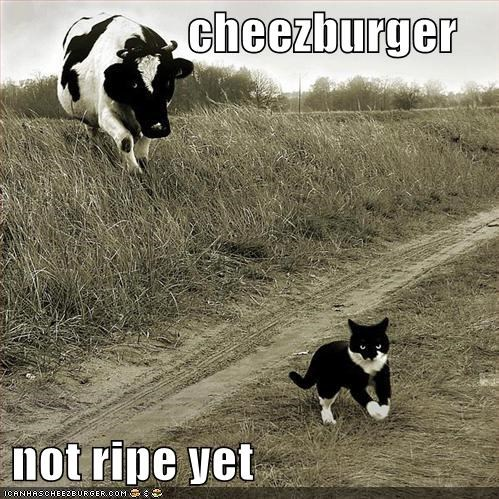 Cheezburger Image 999460096
