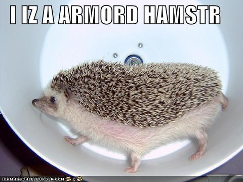 I IZ A ARMORD HAMSTR