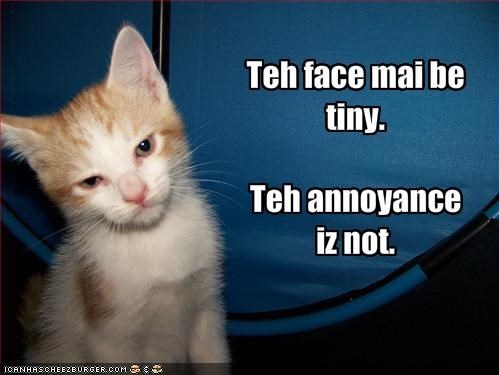 Teh face mai be tiny.