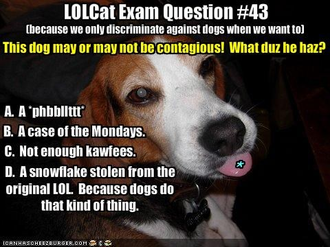 LOLCat Exam Question #43